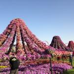 Dubai_Miracle_Garden_14