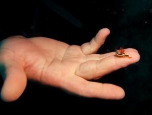Размер моллюска