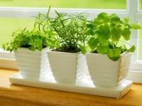 Травы/овощи/лечебные