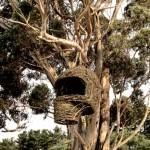 Дом гнездо1