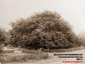 Дуб в имении Арона Гардера меннонитская колония Хортица 1908 г