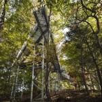 Приключение на дереве