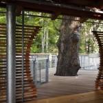 Приключение на дереве5