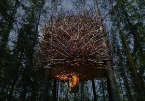 Treehotel44