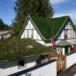 grass-roof-01