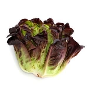 Оаклиф, дубовый салат