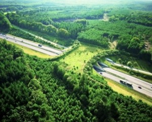 Шоссе A50,  Нидерланды