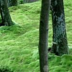 Сад мхов Сайходзи в Киото