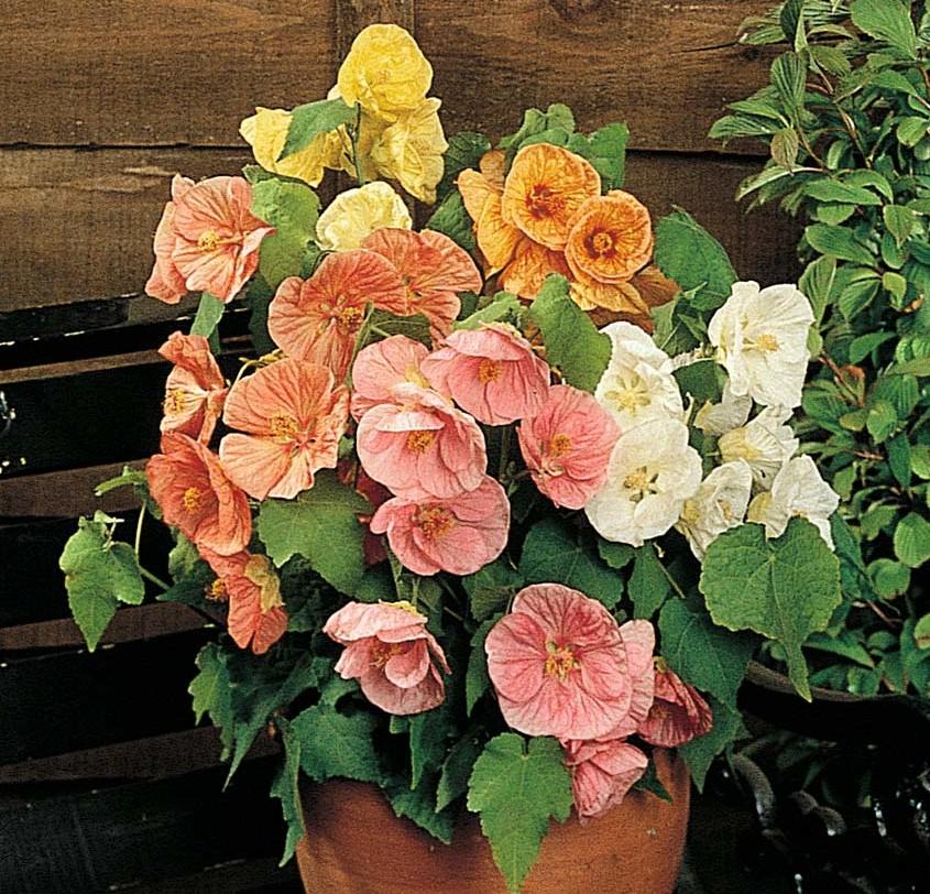 фото галерея дом цветов