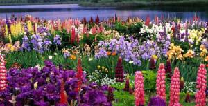 Цветочные ароматы и их календарь