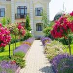 Штамбовая роза в саду