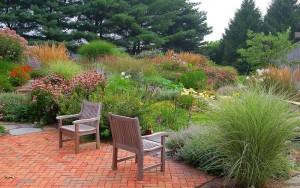 Декоративные злаки и травы в дизайне сада