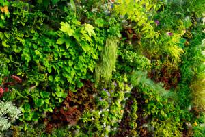 Огород на балконе. вертикальный сад