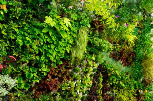 Огородик на балконе