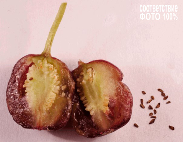Fuchsia, Фуксия Image