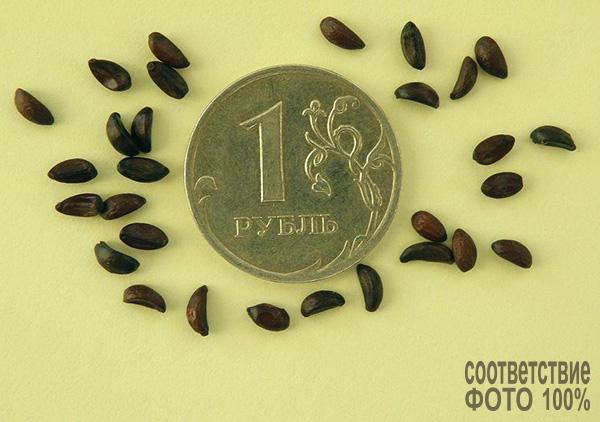 Mahonia aquifolium (Магония падуболистная) Image