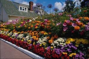 Бордюры из цветов