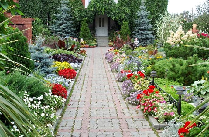 Цветы для бордюров на участке