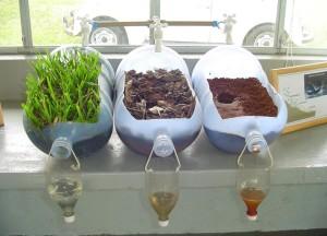 Роль растений в фильтрации примесей и сохранении почвы целой