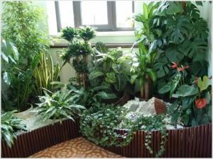 Растения в домашних условиях