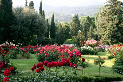 Царство роз в Никитском ботаническом саду