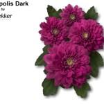 Exopolis Dark (Экзополис Фиолетовый)