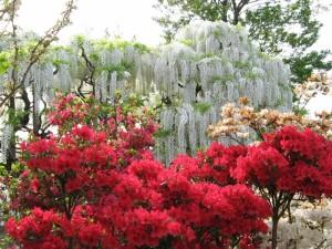 Цветы в парке Асигама