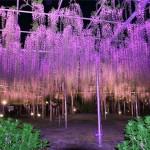 Парк цветов Асигама