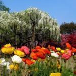 Цветочные сезоны Асигамы