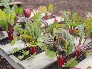 Маленькие хитрости для семян