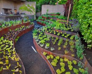 Маленькие хитрости в удобрении  растений