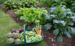 Посев овощных культур