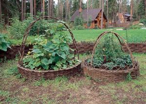 Маленькие хитрости для защиты растений от вредителей