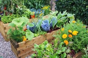 Маленькие хитрости для огорода
