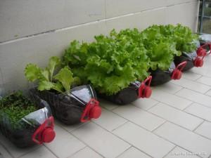 Маленькие хитрости при выращивании овощей