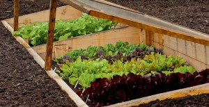 Маленькие хитрости для защиты растений