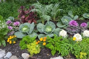 Маленькие хитрости при выращивании рассады