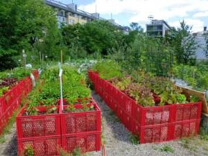 Советы для выращивания овощей