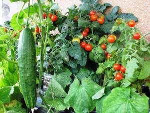 Маленькие хитрости для овощей и фруктов