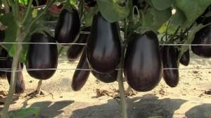 Маленькие хитрости в удобрении и подкормках растений