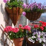 Апмельные растения на балконе