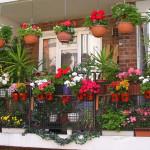 Балкон в цветах и растениях