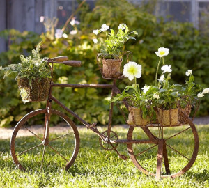Идеи для растений на участке