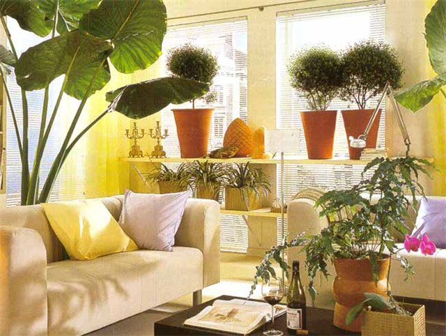 Какое растение для дома выбрать, и где разместить