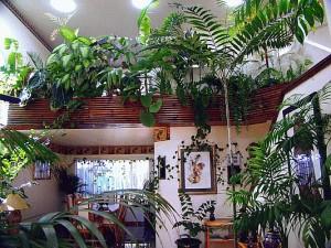Высота растений в интерьере