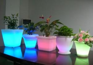 Световые приемы для  растений