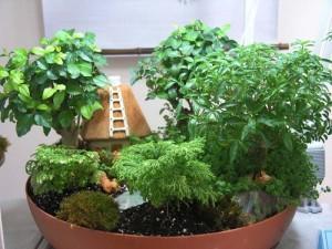 Растения для гостиной