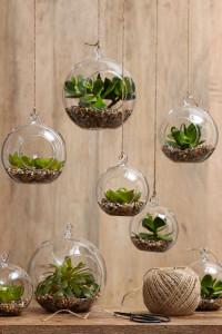 Комнатные растения в фен-шуе