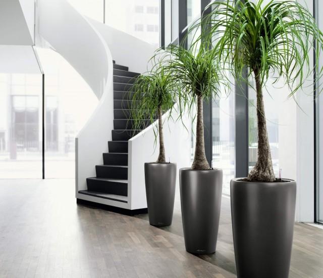 Гармония комнатных растений