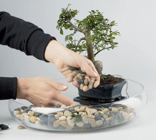 Создаем мини сад своими руками